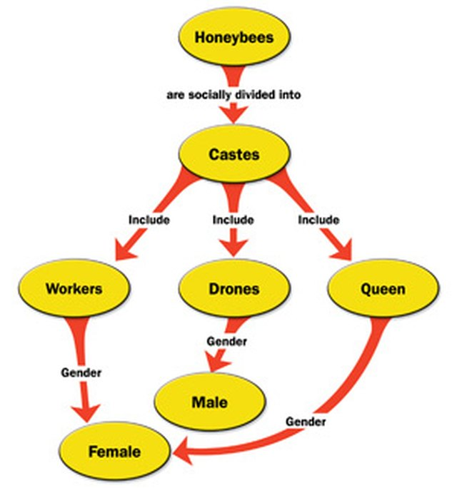 How To Make A Concept Map In Microsoft Word Techwalla