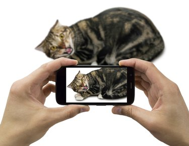 not like to take pictures  with your cellphone