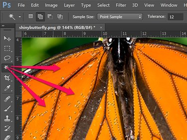 Magic Wand Tool selection on a butterfly photo