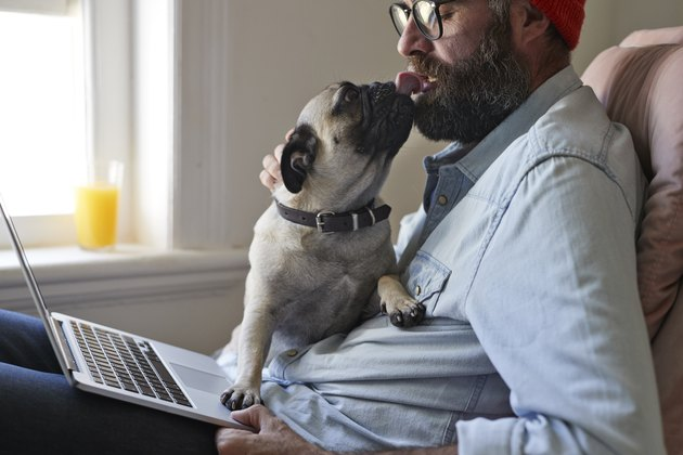 Man sitting with laptop together with Puck dog