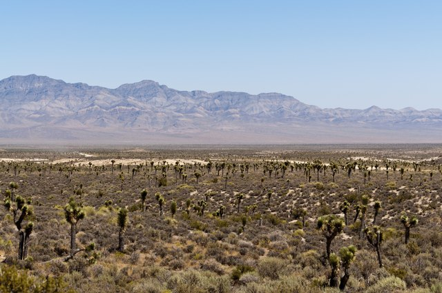 How to Find Area 51 on Google Earth | Techwalla com