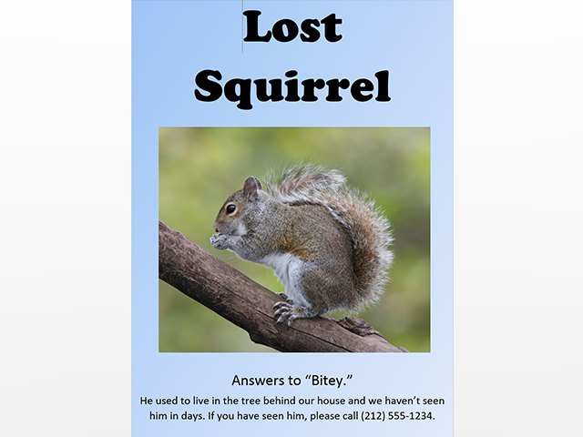 lost squirrel poster